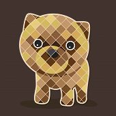 pic of pomeranian  - Graphic of pomeranian puppy with navy blue background - JPG