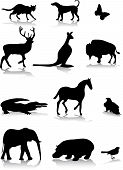 picture of white horse  - set of different animal silhouettes in black and white - JPG