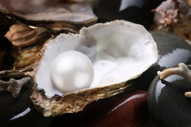 image of oyster shell  - Image of a white pearl in the shell on wet pebbles - JPG