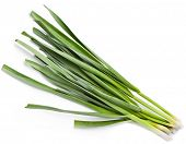 stock photo of bine  - young green garlic leaves isolated - JPG
