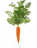 Постер, плакат: Морковь свежая изолированные на белом