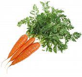 Постер, плакат: Свежая морковь на белом фоне