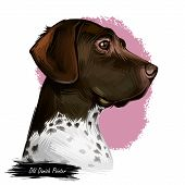 Old Danish Pointer Dog With Spots On Short Fur Isolated Digital Art. Pet Originated From Denmark Sca poster