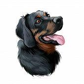 Polish Hunting Dog Portrait Isolated On White. Digital Art Illustration Of Hand Drawn Dog For Web, T poster