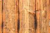 Tree Bark Texture On Firewood. Wood Bark Background. poster