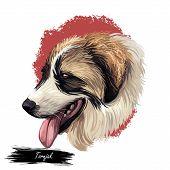 Tornjak Or Croatian Shepherd Dog Breed Portrait Isolated On White. Digital Art Illustration, Animal  poster