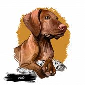 Vizsla Dog Breed Portrait Isolated On White. Digital Art Illustration, Animal Watercolor Drawing Of  poster