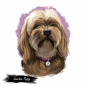 Lowchen Puppy Doggy Petit Chien Lion Digital Art. French Originated Domesticated Animal Of Small Siz poster