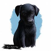 Majorca Shepherd Puppy Watercolor Pet Portrait Digital Art. Canine Originated In Spain, Balearic Isl poster
