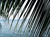 Palm Leaf Over Sea Landscape In Cloudy Day. Neutral Seaside Abstract Photo. Tropical Seaside Backgro poster