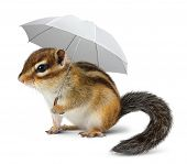 Funny Chipmunk With Umbrella On White
