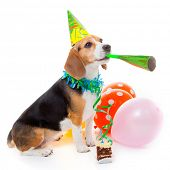 stock photo of blowers  - dog party animal celebrating birthday or anniversary - JPG