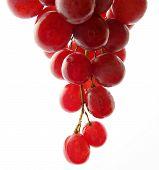 Постер, плакат: Гроздь винограда