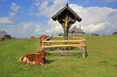 stock photo of velika  - Wooden cross pastureland - JPG