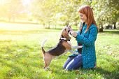 picture of caress  - Girl playing with her beagle dog in autumn park - JPG
