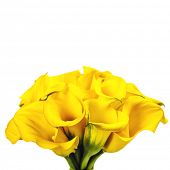 foto of calla  - Beautiful Calla Lilly  Bouquet  - JPG