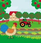 stock photo of rooster  - rural landscape  - JPG