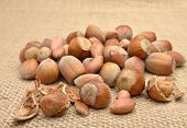 stock photo of cobnuts  - Hazelnuts on old brown canvas in studio - JPG