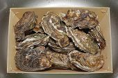 foto of oyster shell  - Bunch of Fresh Raw Oysters in Crate - JPG
