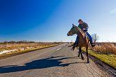 pic of saddle-horse  - Man is riding a horse on rural landscape road of asphalt - JPG