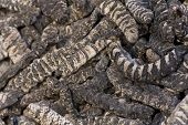stock photo of larva  - Dried edible insect larva at a market in Chinatown NY - JPG