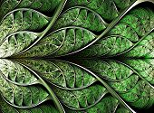 picture of fractals  - abstract plant background fractal illustration digital generated image - JPG