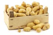 pic of solanum tuberosum  - original french  - JPG