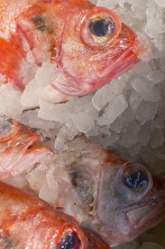 picture of red snapper  - Raw red snapper on ice at a farmer - JPG
