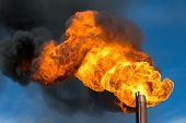 picture of torches  - Huge flame of a torch from burning of associated gas - JPG