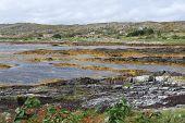 image of irish moss  - Moorland in Ireland - JPG