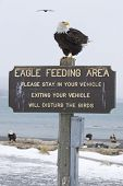 picture of hookup  - Alaskan Bald Eagle on Eagle Feeding Area sign and with RV hookup - JPG