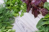 Variety Of Fresh Organic Herbs On Wooden Background. Freshly Harvested Herbs Including Basil, Arugul poster