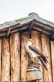 Hand Carved Wooden Eagle Totem Standing Guard Over  A Building In The Andes Mountains Of Ecuador poster