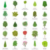 Tree Types Icons Set. Isometric Illustration Of 25 Tree Types Vector Icons For Web poster