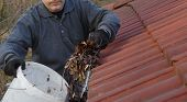 Man Cleaning Dirty Gutter From Moss And Leaves. Building With Unclean Tile Roof After Winter. Spring poster