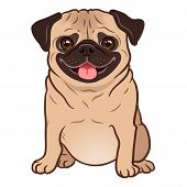 Pug Dog Cartoon Illustration. Cute Friendly Fat Chubby Fawn Sitting Pug Puppy, Smiling With Tongue O poster