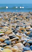 Sea And Seashells. A Lot Of Empty Sea Shells On The Beach, Close-up View. Sea Coast And Sea Flora. poster