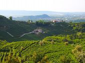 picture of italian food  - Photo of a vineyard in Valdobbiadene Veneto Italy - JPG