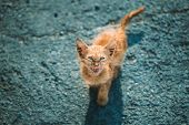 Dirty, Murky, Sickly Red Kitten Mercifully Meows On Street. Homeless Ginger Cat Outdoor In Street. poster