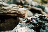 Broken Sunglasses On Stone With Moss In Sunlight. Lost Thing On Mossy Boulder In Sunny Day. Glare On poster