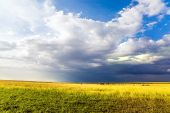Travel to tropical Africa. Grassy savannah of the Horn of Africa. Gorgeous cumulus clouds pile up ov poster