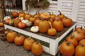 Table Of Pumpkins For Sale At A General Store In The New England Town Of Dorset, Vermont On A Cold,  poster