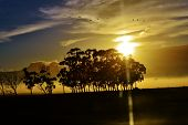 foto of ceres  - landscape with blue gum trees and montains in the background - JPG