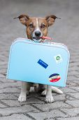 stock photo of runaway  - homeless dog holding a blue big bag - JPG