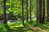 stock photo of early spring  - Early morning sun in the green forest - JPG