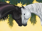 picture of shire horse  - Couple horse sharing their love and care in the wilderness - JPG