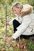 pic of face-fungus  - Woman gathering wild mushrooms - JPG