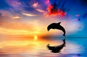 stock photo of dolphin  - Beautiful calm ocean at sunset - JPG