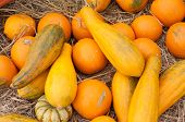 stock photo of cubit  - Pumpkins  - JPG