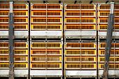 foto of slaughterhouse  - Empty cages for poultry transport to slaughterhouse - JPG